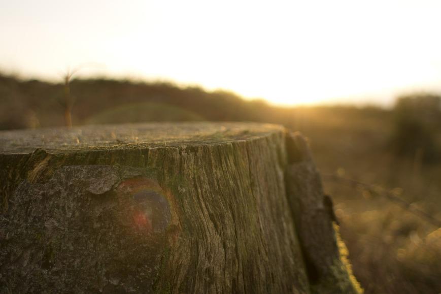 stump-351471_1920