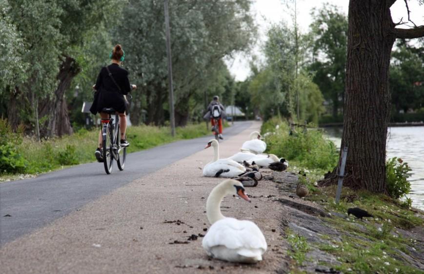 Albertslund Bikeway