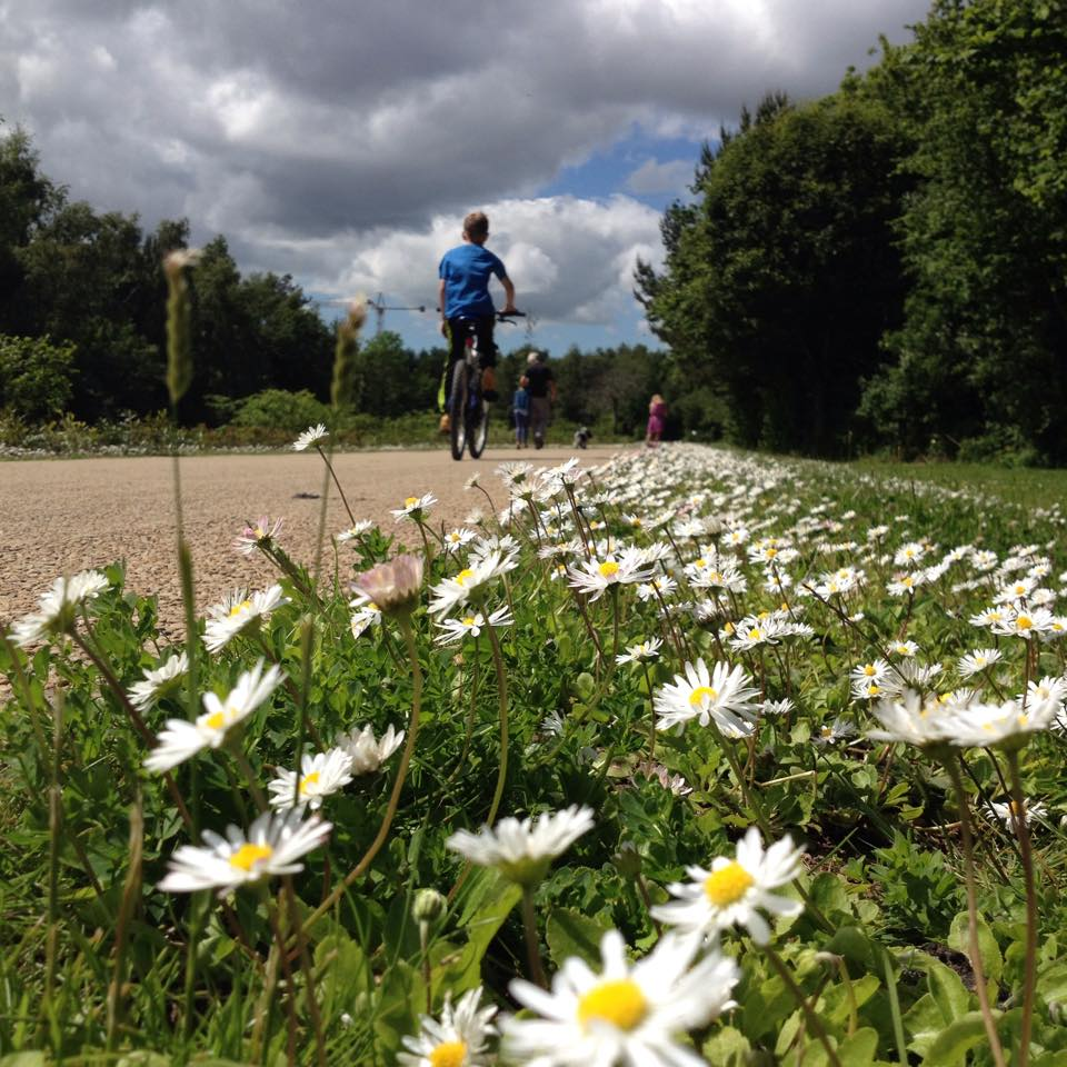 Daisies in Victoria Park sent in by Fiona Ann Patterson