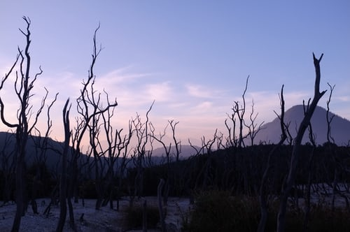 dead forest pic
